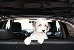 Do you have a dog? Here are 3 financial insights owners already know
